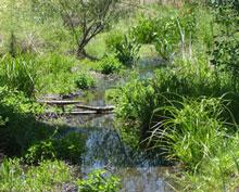 grassy stream