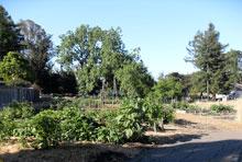 Lydia Commons community garden