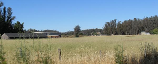 Laguna farmland